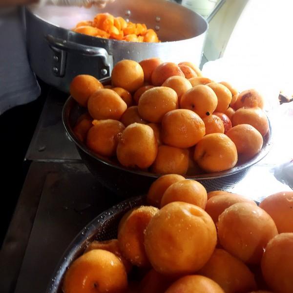 千曲の杏子